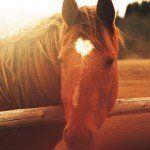 Psicoterapia Gestalt con caballos