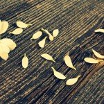 El duelo: contacto con el vacío